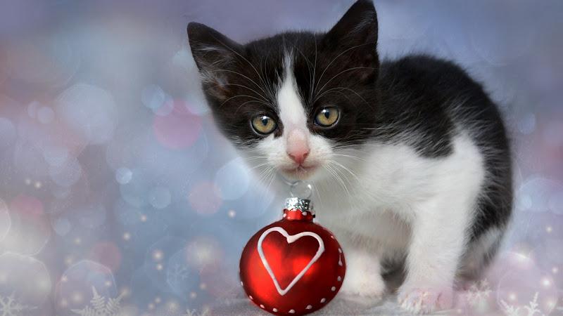 Lovely Kitten for Christmas