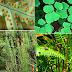16 Ciri Tumbuhan Paku (Pteridophyta), Contoh, Klasifikasi & Reproduksi