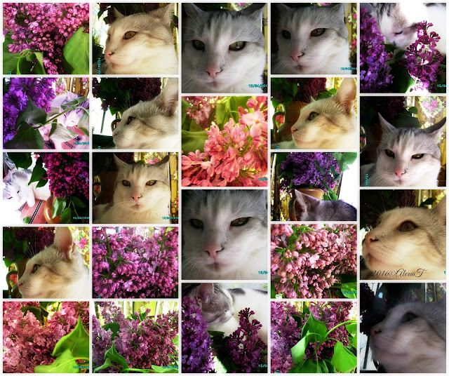 "Portrait in purple lilac; Daydreaming Spring of a ""baby"" cat. Puiu M in April 2016."
