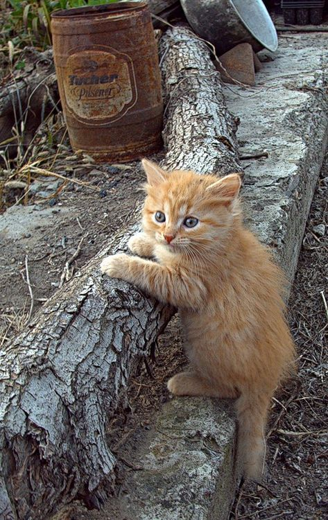 this little kitty could live on my farm..too cute #wildskyapothecary