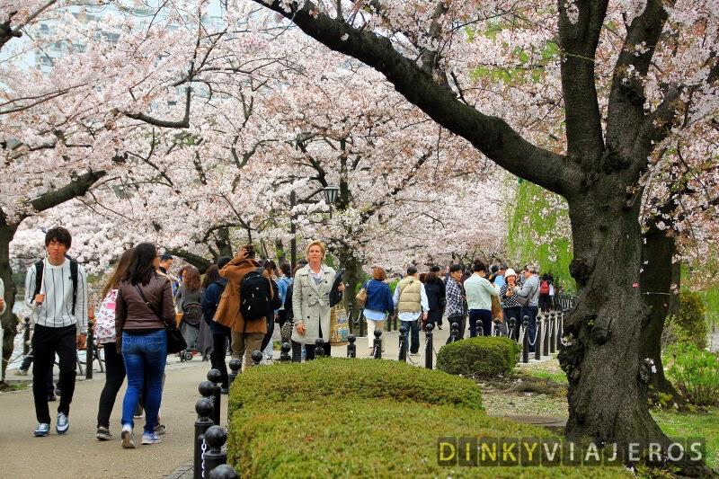 Cerezos en flor en el Parque Ueno