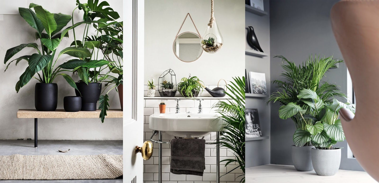 Come creare un 39 oasi verde a casa 7 idee per decorare l for Idee per casa