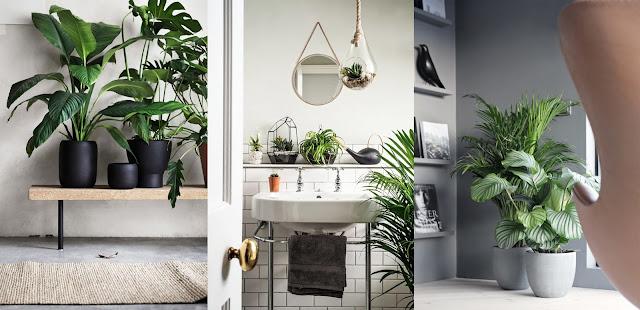 Come creare un 39 oasi verde a casa 7 idee per decorare l - Piante verdi interno ...