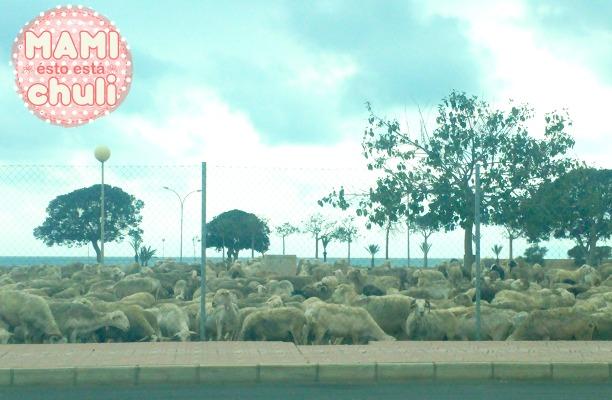 ovejas_que_sorprenden_a_los_peques