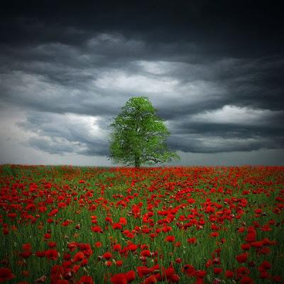 Paisaje con un árbol y flores rojas
