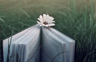 Contoh Novel Fiksi dalam Bahasa Indonesia