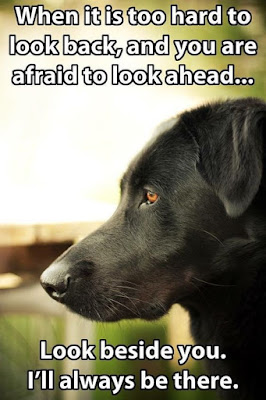 Funny dog pictures : The thinking of a dog