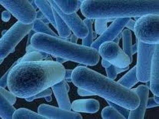 bactéries anaérobies