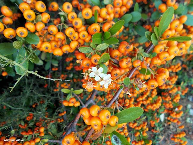 Νοέμβριος-Δεκέμβριος: Άγρια φαγώσιμα χόρτα της Ελλάδας