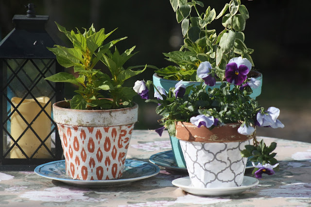 potted flowers, flowerpots, plants, ferns