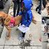 ΜΕΤΑ ΤΗΝ ΕΠΙΘΕΣΗ! Θεραπευτικοί σκύλοι στο Πίτσμπουργκ...