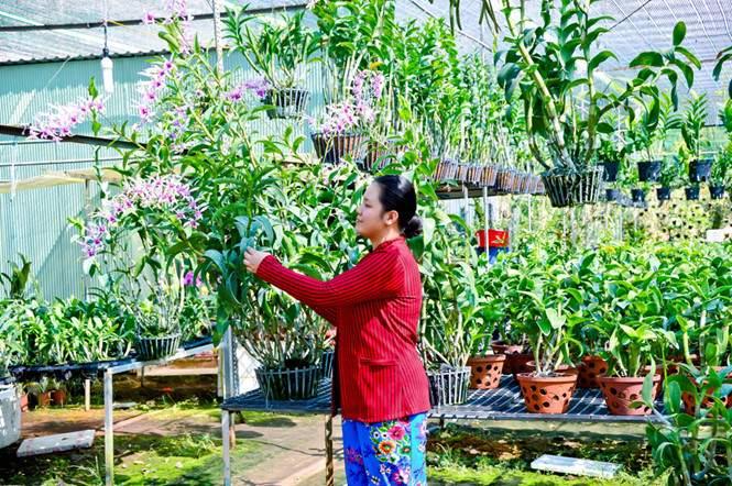 Trồng lan trong vườn nhà cho thu nhập khá