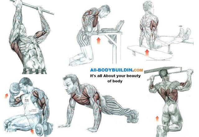 bodyweight muscle building program pdf