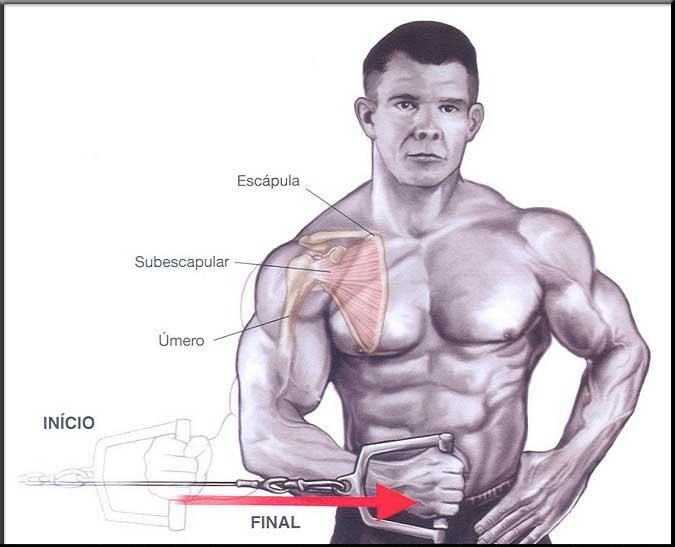 Exercício para M. Subescapular