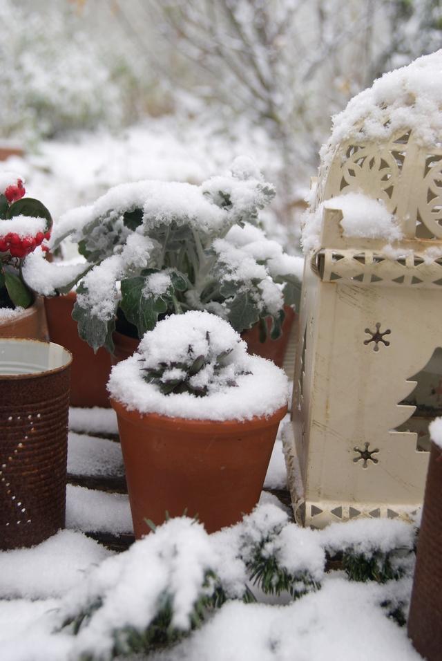 verschneiter Gartentisch mit Hauswurz und Laterne