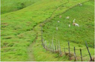 padang-savana-dan gerombolan-ternak-di-bukit-rimpi