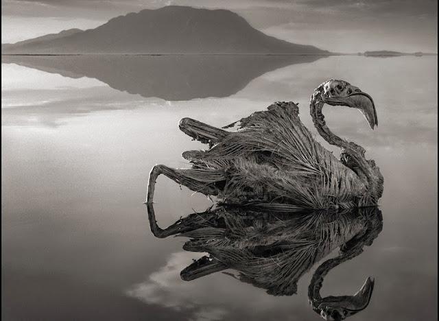 flamingo-múmia-lago-natron