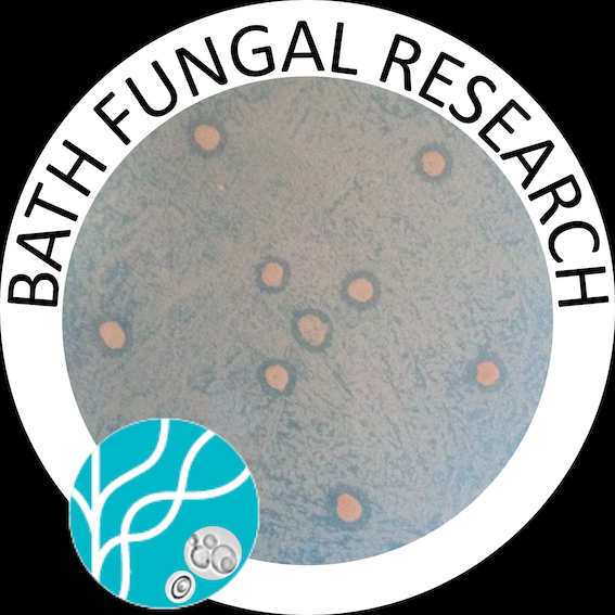 Bath Fungal Research