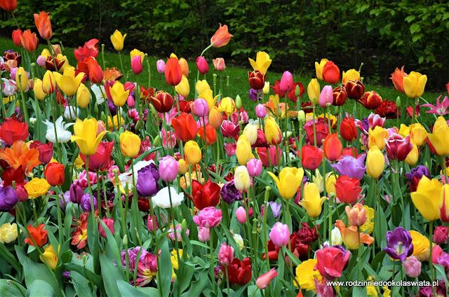 Holandia z dziećmi- magiczny ogród Keukenhof