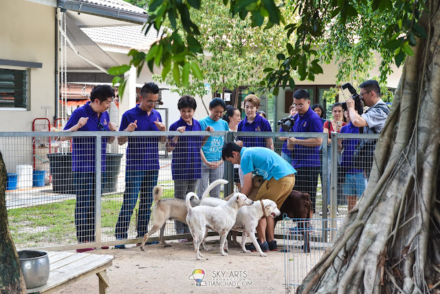Million Loves in Me 寵我 SPCA Ampang Charity Pledge cats and dogs