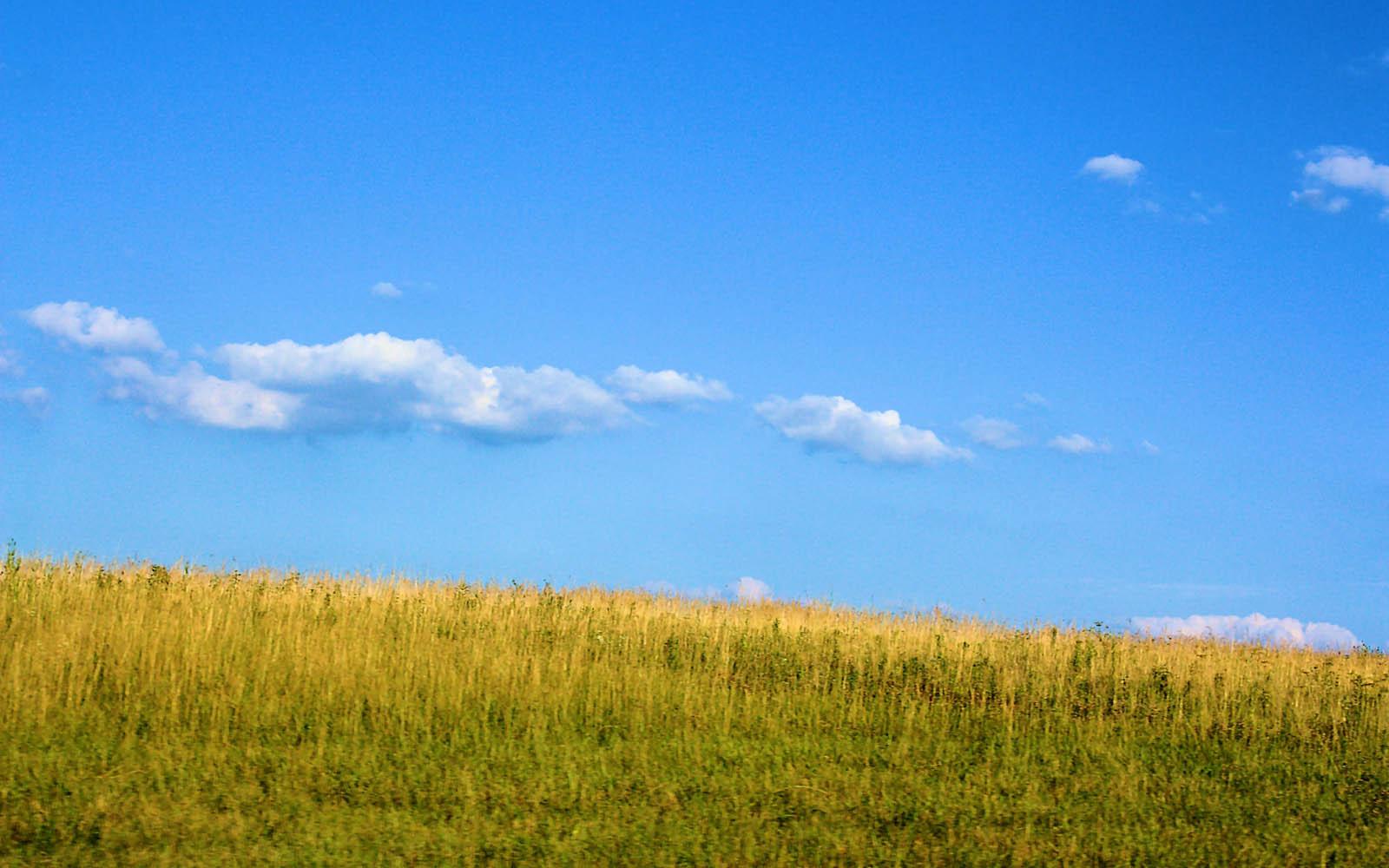 pasture wallpaper - photo #31