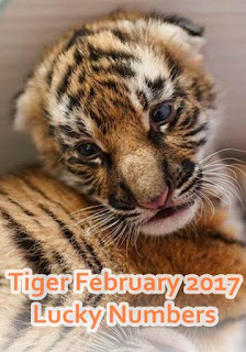 Tiger zodiac February 2017 Lucky Numbers
