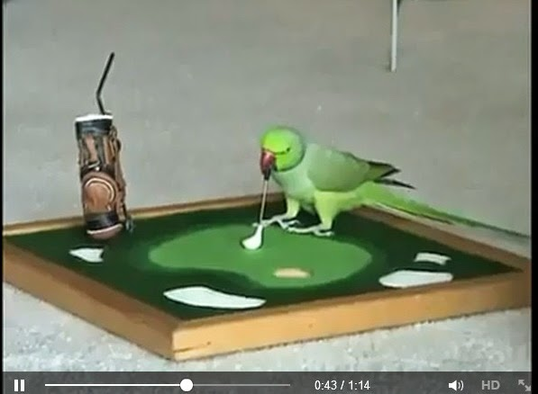 http://www.funmag.org/video-mag/mix-videos/talented-parrot/