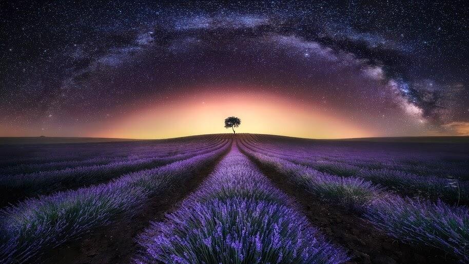 Stars, Night, Sky, Milky Way, Lavander, Flower Field, Scenery,Landscape, 4K, #4.781