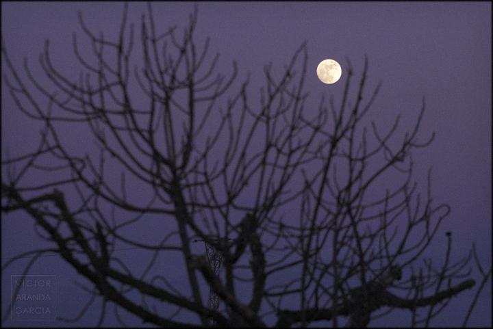 fotografia,luna,higuera,naturaleza,anochecer,fuente_alamo,limites,serie,arte