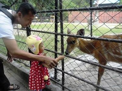 Memberi makan rusa di Kebun Binatang Surabaya