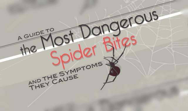 Spider Bite Guide