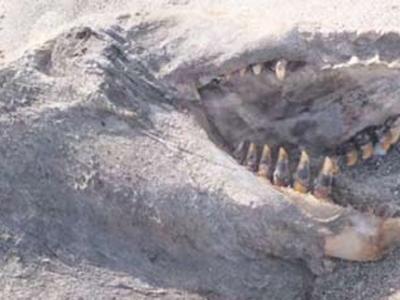 Tulang gergasi misteri