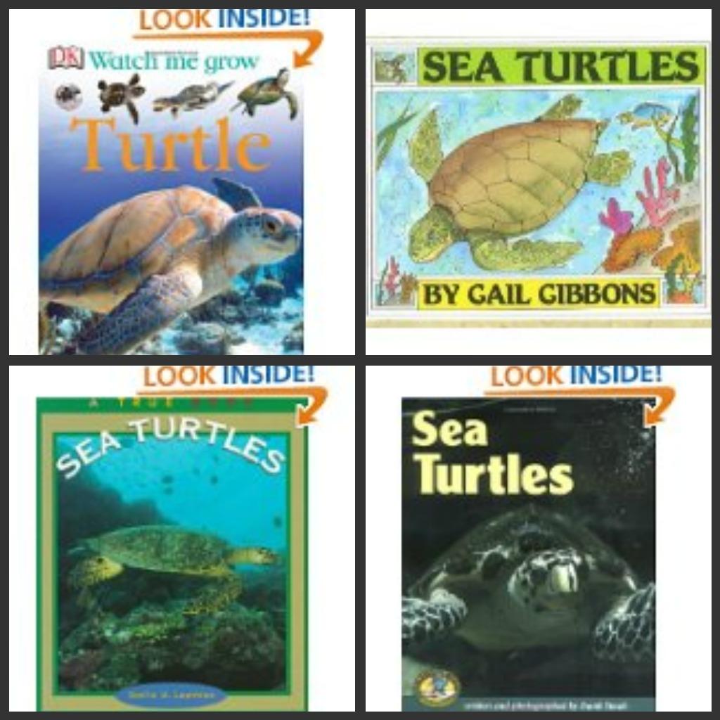 The Story Of My World Ocean Week 2 7