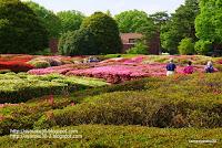 神代植物公園のツツジ園写真