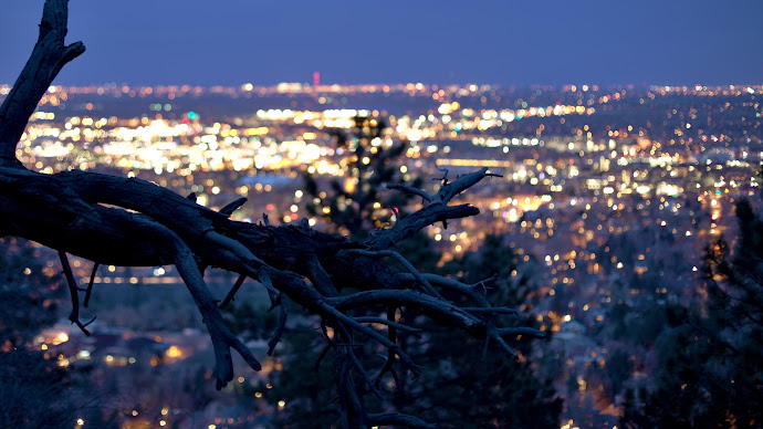 Wallpaper: Dry tree with the city lights in background