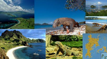 Hasil gambar untuk paket tour pulau komodo