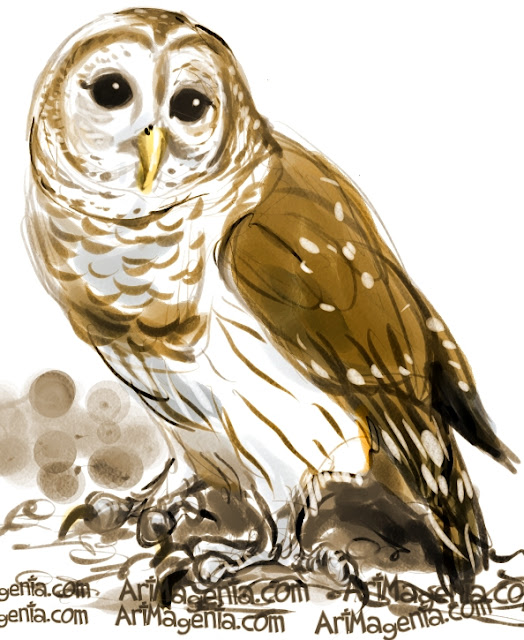 Barred Owl sketch painting. Bird art drawing by illustrator Artmagenta