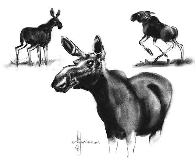 Moose drawing by Artmagenta