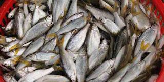 Mengenal ikan pora pora, ikan asli danau toba yang terancam punah