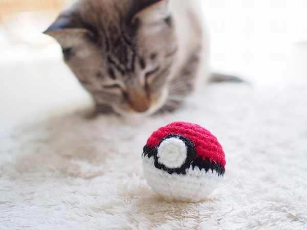 モンスターボールの編みぐるみとそれを見つめるシャムトラ猫