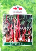cabai lentur f1,benih cabe lentur,cabai keriting,panah merah,tahan cacar,cabai f1 lentur