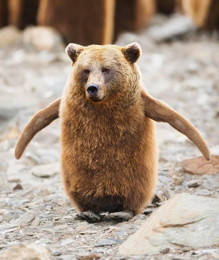 04-Penguin-Bear-AOG-Fredriksen-Animal-Art-www-designstack-co