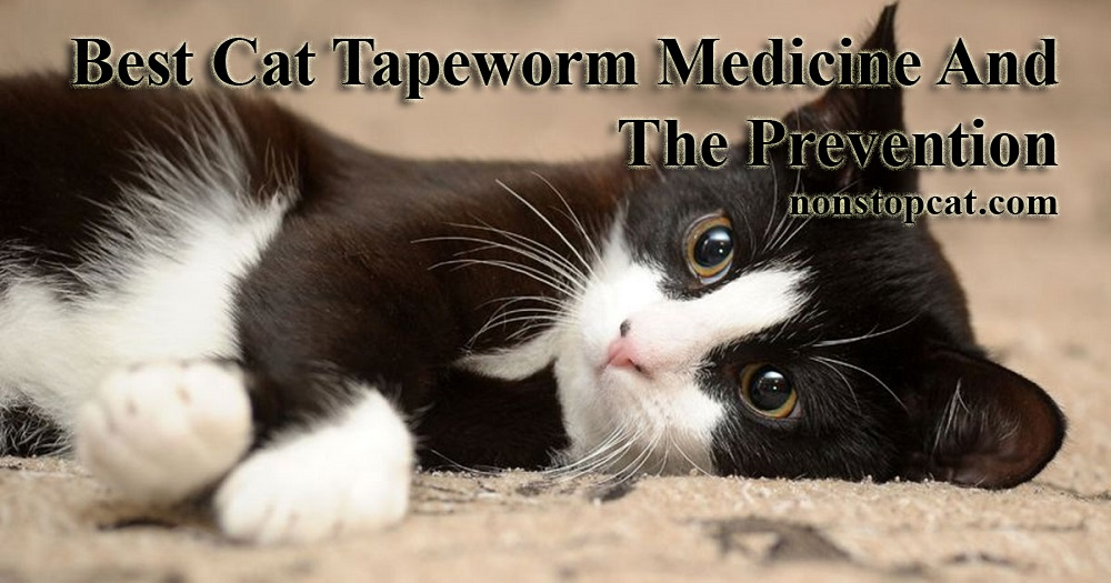 Best Cat Tapeworm Medicine And The Prevention