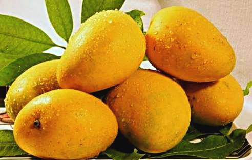 Health Benefits And Disadvantages Of Mango Fruits
