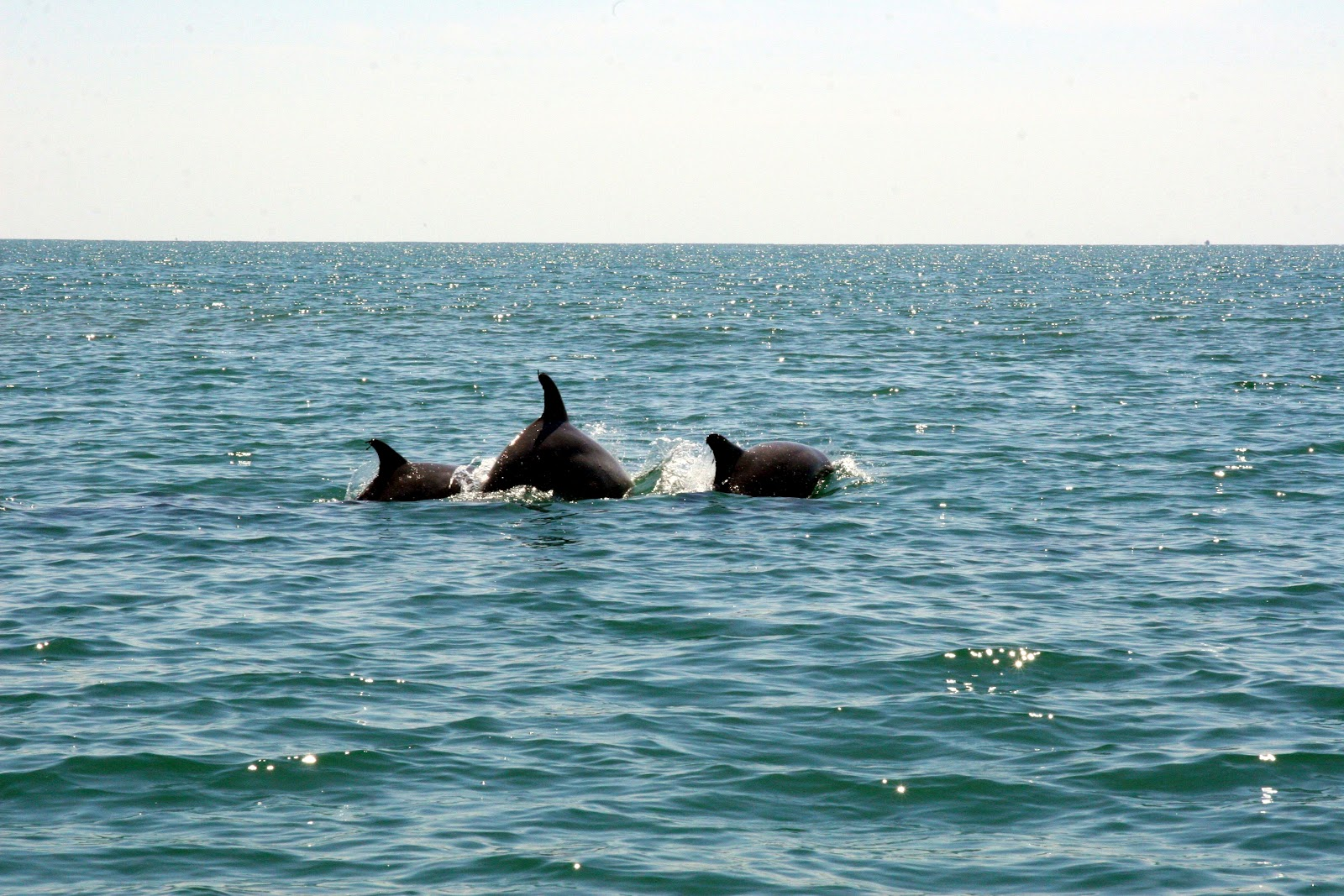 Dolphins Myrtle Beach The Best Beaches In World