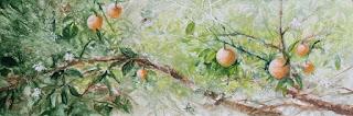 Resultado de imagen para naranjales
