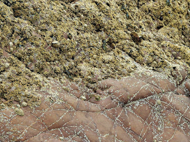 Close up of rock strata at Northcott Mouth, Cornwall