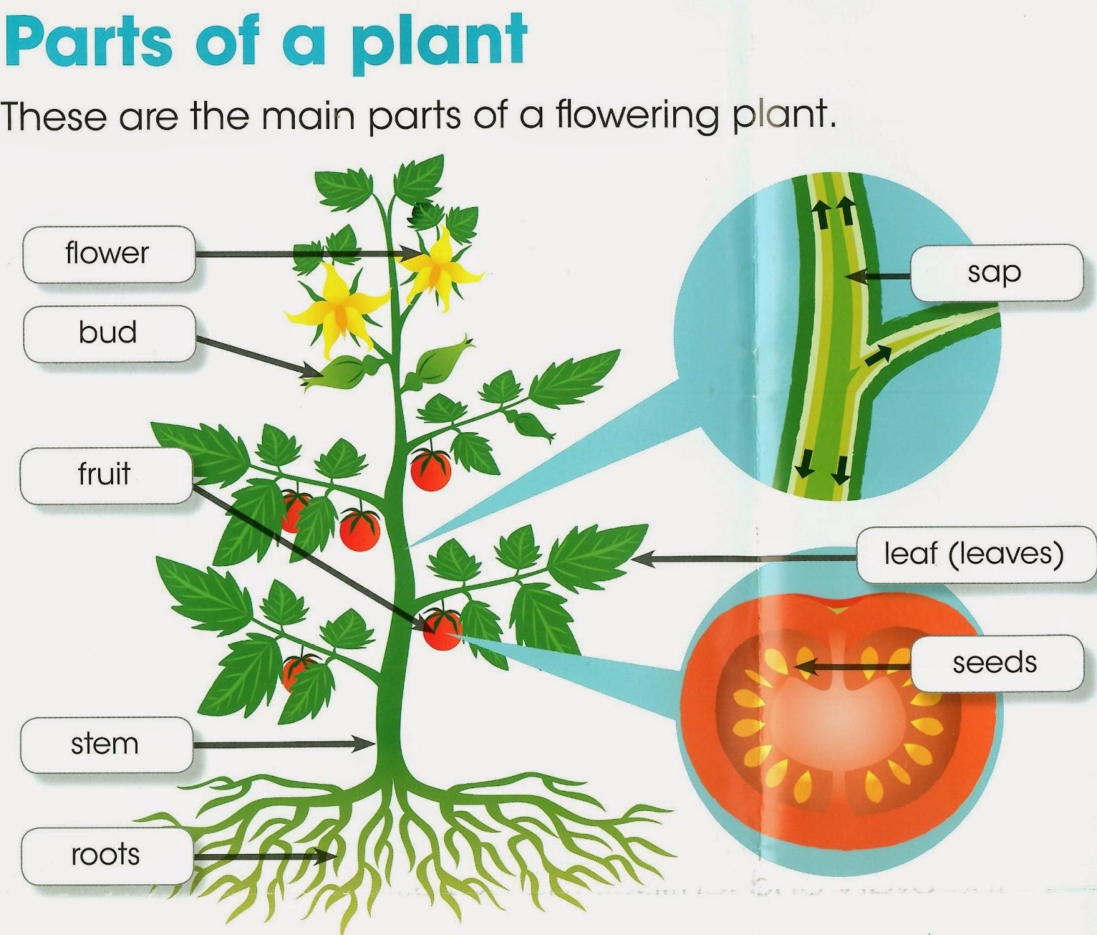 Plants English Lab