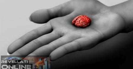 531b822eb Revellati online  Cientistas criam  mini- cérebros humanos  com células- tronco