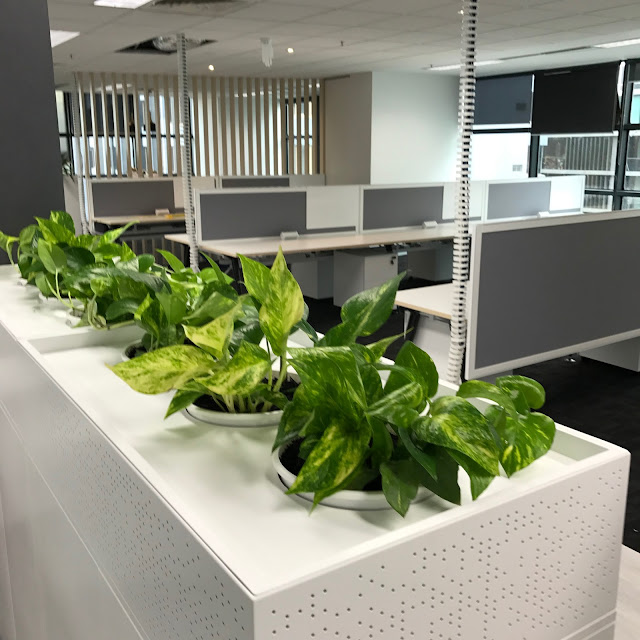 Office Plant Hire Melbourne Making a work place greener Indoor
